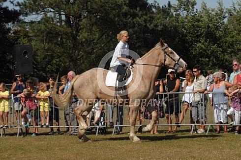 Vlaams paard met meisje
