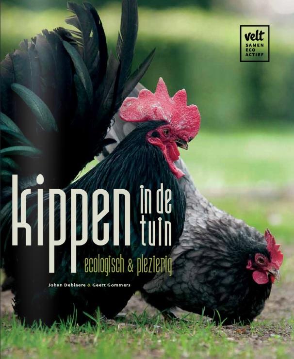 Kippen in de tuin