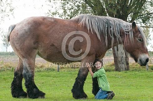 Meisje met trekpaard