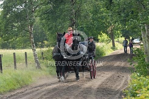 Buitenrit paard en wagen