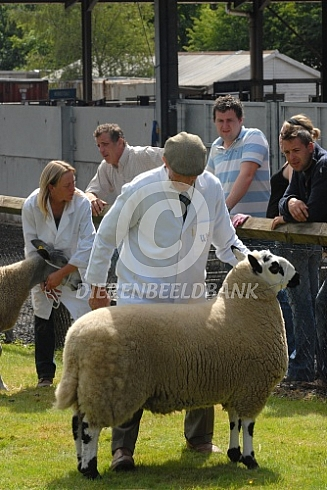Kerry Hill schaap op keuring Engeland
