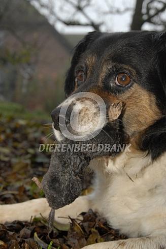 Hond met mol
