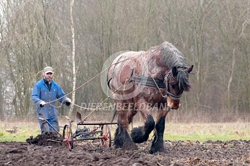 ploegen met een trekpaard