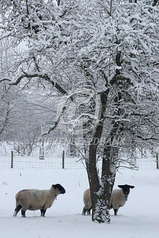 Suffolk in de winter