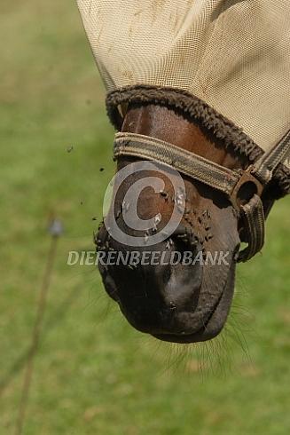 Vliegenmasker paard