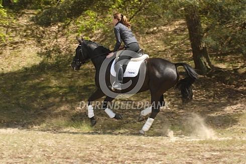 Met mijn paard door de duinen