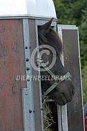 Paard in trailer
