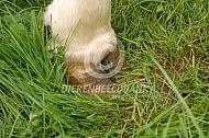 Klauw van een koe
