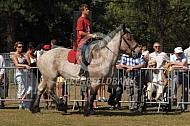 Belgischtrekpaard