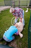 Opvoelen alpaca