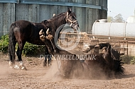Rollend paard