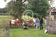 Lakenvelder runderen