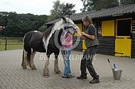 Paardentandarts aan het werk