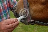 Pony ontwormen