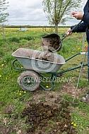 Opruimen mest uit het weiland