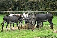 De ezels van Theun de Winter