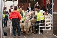Importeren van alpaca's