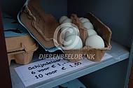 Eieren van de Schijndelaar te koop