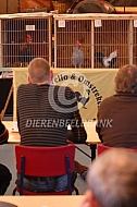 Hanenkraaiwedstrijd