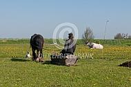 Werken met paarden