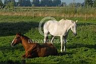 Twee oude paarden in de wei