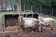 Landgeiten in de Mariapeel