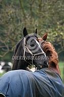 Groomende of poetsemde paarden