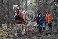 Boomslepen met Vlaams trekpaard