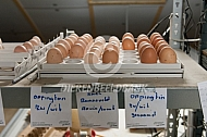 Eieren klaar voor de broedmachine