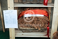 Alpacashow Hapert prijswinnende alpacawol