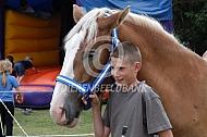Vllams paard met jongen