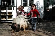 Hobbyvarken op de kinderboerderij