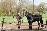 Dierenarts onderzoekt paard