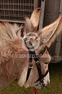Handig hoofdstel ezel