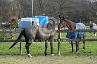 Ontmoeting twee paarden