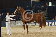 Keuring Gelders paard