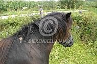 Pony met staart- en maneneczeem