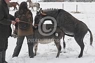 Dekking ezels