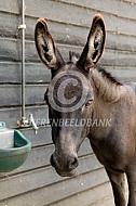 Mediteranne mini-ezel
