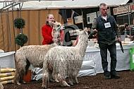 Op de alpacashow