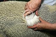 Fijnheid vezels alpacawol