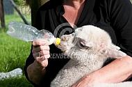 alpaca cria aan de fles