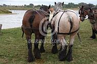 Trekpaarden met gecoupeerde staart