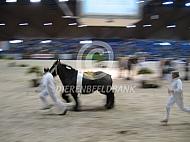 Trekpaarden keuring