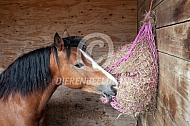 Paard met hooinet