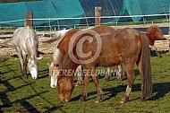 Paardenopvang