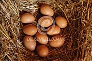 Legnest met eieren