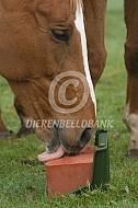Paard met liksteen
