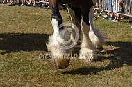 Paard met sokken