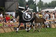 Demonstratie Groninger paard met veulen